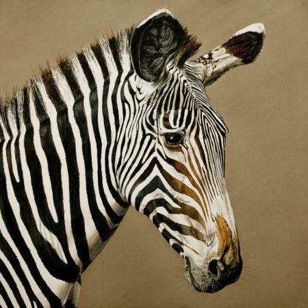 Grevy's Zebra Print by McCracken